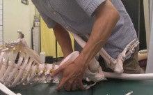 $腰痛・肩こりを整体&エクササイズで根本から改善!西新宿おくがわ整体院blog 新宿 西新宿 中野 渋谷-骨盤アプ
