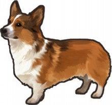 $ドッグウェア ダウン【愛犬に着せたいランキング】