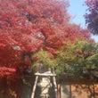 ステキな紅葉&夕日で…