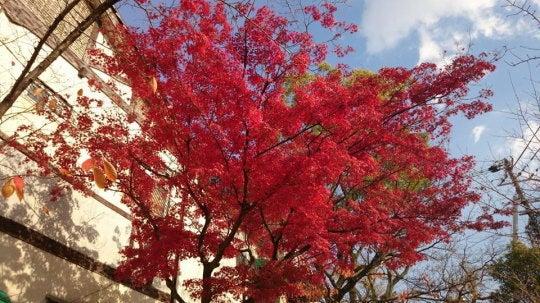 はすのやにっき-紅葉2013京都その1