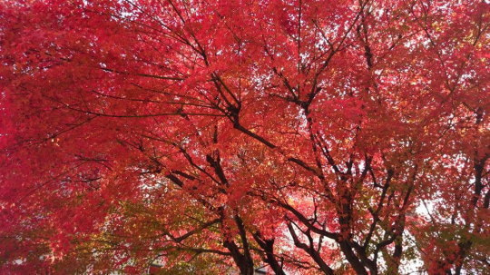 はすのやにっき-紅葉2013京都その2