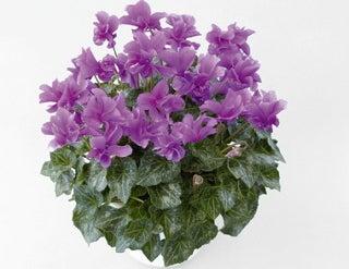 ワレモコウ~感謝 福井市のお花屋さんブログ-サントリー セレナーディア