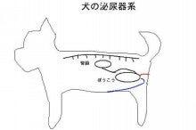 異所性尿管 -尿漏れ | Dog=GOD...