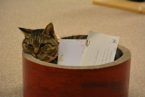 保護猫カフェ『ねこかつ』@川越できました。