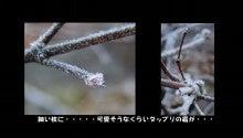 紅葉の枝に付いた霜