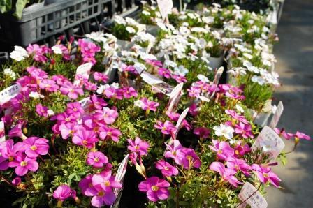 富士市 フラワーハウス 花花館