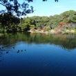 秋の栗林公園