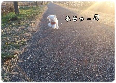 ハルのひなたぼっこ..U・×・U♥