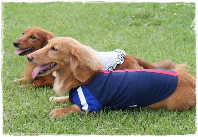 旅犬Lani&Leaのほほん風船記-むぅちゃん