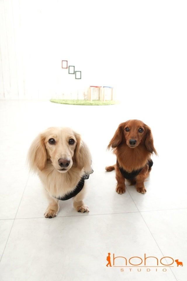 旅犬Lani&Leaのほほん風船記-hoho studio