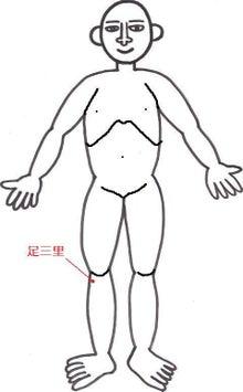 はりとお灸の豐春堂のブログ-足三里①
