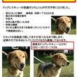 犬迷子【ご協力お願い…