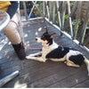 高崎市 安中市 犬のしつけ 基本卒業の画像