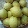 有機栽培のレモンの画像