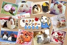 モルフクカレンダー2014