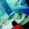 水族館。の画像