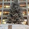 東京・丸の内、キッテのクリスマスツリー!の画像