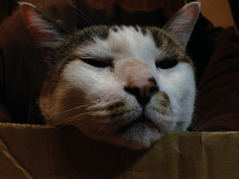 むふうの駅長猫