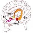 脳科学 3 海馬