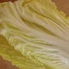 シャキシャキ白菜マリネの画像