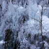 冬の景色の画像