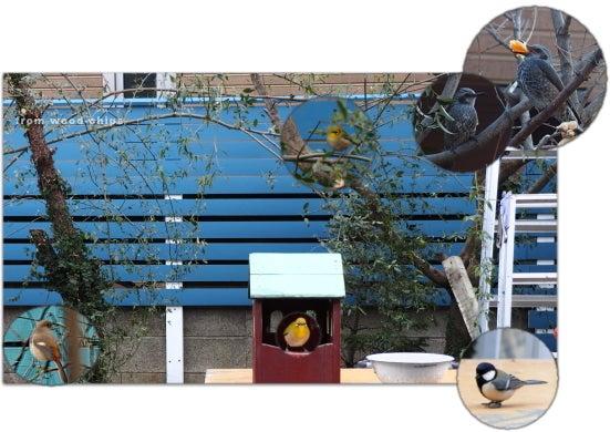 バードフィーダー bird house