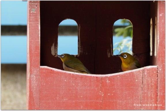バードハウス bird house