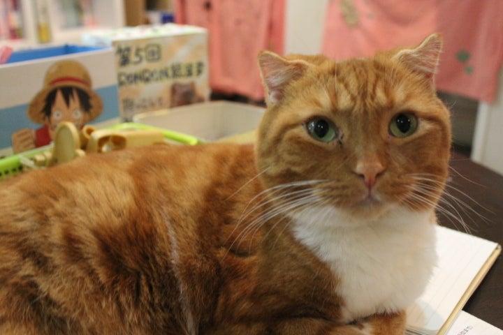 猫カフェ RonRon 新ブログ-キャラメル