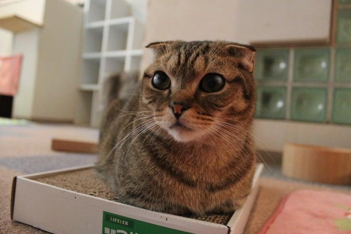 猫カフェ RonRon 新ブログ-小鉄