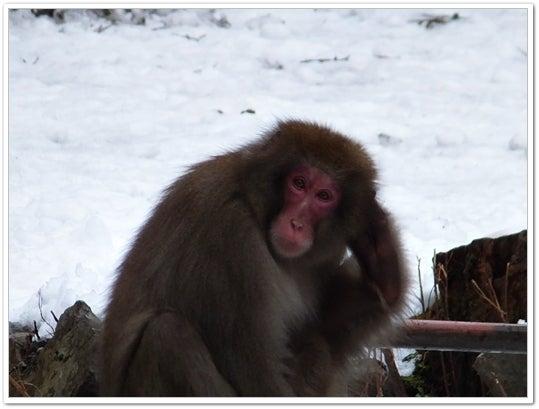 神庭の猿1