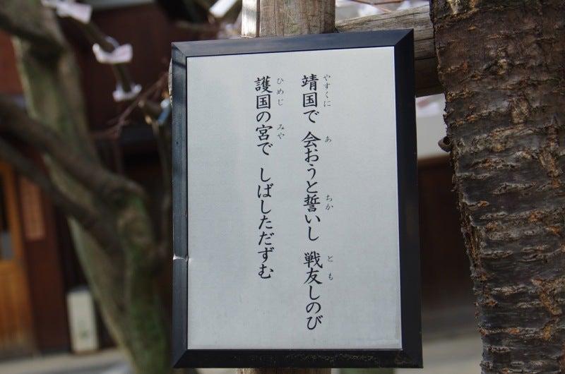 護國神社 桜
