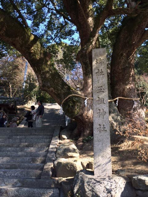 玉祖神社水仙10