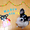*Happy B-day!*の画像
