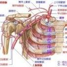 腋窩動脈の枝は?  6つ  必 の記事より