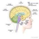 視床下部の機能中枢は? 5つ  必 G 脳、神の記事より