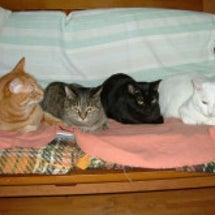 18日から猫イベント…