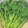 かき菜と伊予柑のサラダ☆の画像