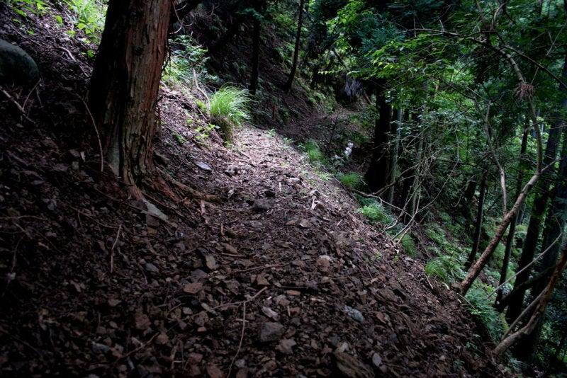 鎌刃城/05急斜面の道