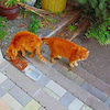 猫たちのことの画像
