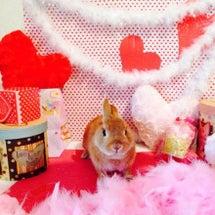 バレンタインセット
