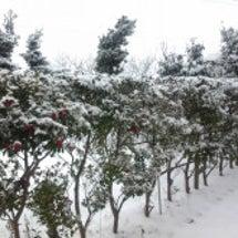 雪国新潟♪