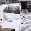 78年ぶりの大雪だ!の画像