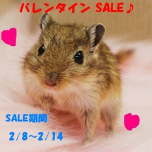 ★バレンタインSAL…