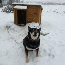 雪と流行りモノ。