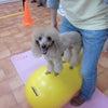 飼い主様とも連携できるフィジカルトレーニングとマッサージ♪の画像