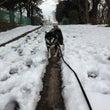雪散歩、そして又雪?…