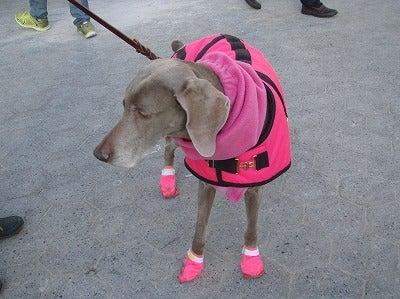 ピンクのブーツ