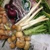 フランス産食材大量入荷!!の画像