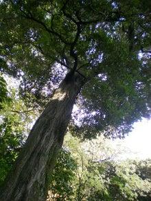 木はあれど