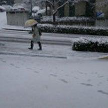 雪のわんこラボ、今朝…